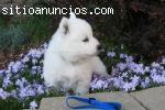 Regalos adorables cachorros, blanco como