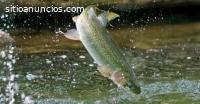 Criaderos de peces truchas y tilapias