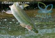 Crianza orgánica, opción acuícola