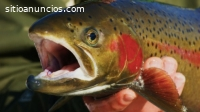 Cultivo de peces en tanques
