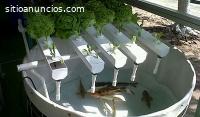Cultivo de peces y plantas orgánicas