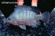 Curso de piscicultura, proyecto integral