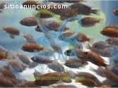 Estanques acuícolas, manejo profesional