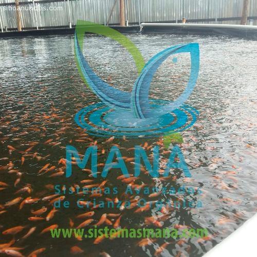 Anuncios clasificados gratuitos en for Criaderos de pescados colombia