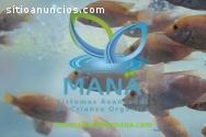 Maná ofrece acompañamiento profesional.