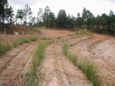 minas carbon vetiver colombia