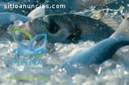 Proyección empresarial con acuicultura