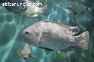 Sistemas acuícolas, cultivo rentable de