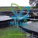 Sistemas acuícolas libre de enfermedades