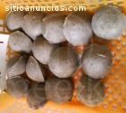 Prensa Meelko carbón en briquetas 10-15