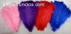 Ventas de plumas de avestruz y disfraces