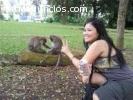 Volver a casa monos capuchinos machos y