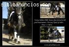 Joven caballo PRE montado