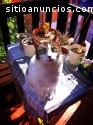 Gordo, gatito en adopción