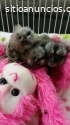 bebés mono y otros primates