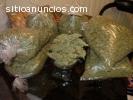Marihuana Medicinal, drogas malas hierba