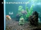 Arena Granulada para acuarios y peceras