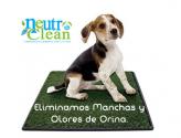 Lavado orgánico de alfombras y muebles a