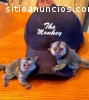 Monos bien entrenados y bebés chimpancés