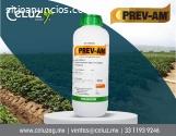Producto para el campo Prev-am