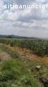 Rancho en venta Huanímaro Gto.