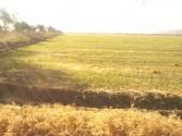 Rancho en venta Cuerámaro Gto.