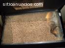 Briquetas de madera de alta calidad y pe