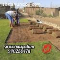 Grass americano, bermuda y paspalum
