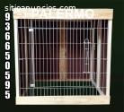 jaulas en malla galvanizada para gallos
