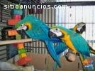 Papagaios e papagaios recém-colhidos com