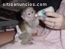 Capuchino adorable y tití pigmeo!