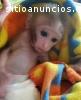 macaco do esquilo do bebê