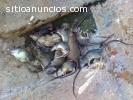 Fumigacion 100% Ecologicos en Maracaibo