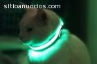 Mascotas a la moda con sus Collares Led