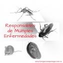 Fumigación Exterminio Total de Insectos