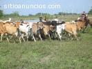 Vendo Fundo en Parapara 129 hectareas